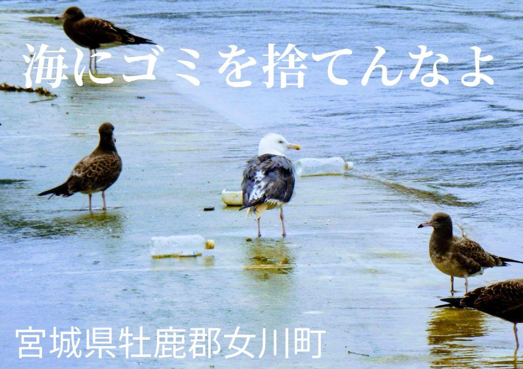 A02_04宮城_村上康博のサムネイル