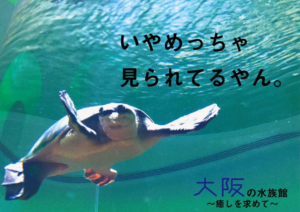 2018I43_27大阪府上野智也のサムネイル
