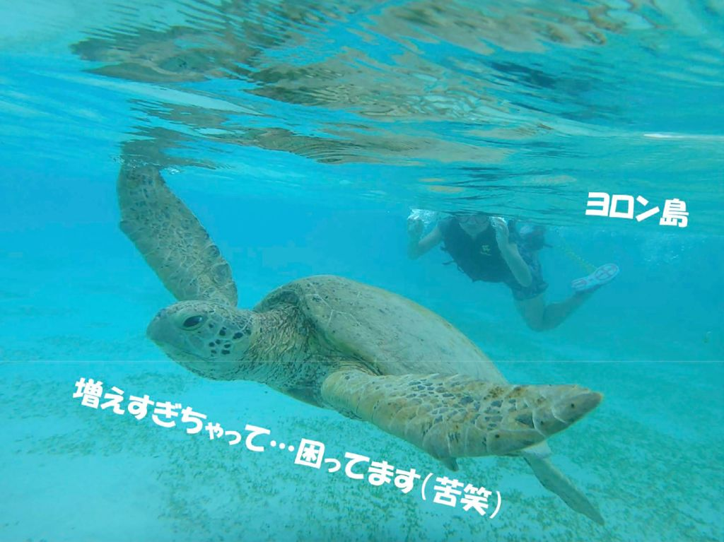 2018I71_46鹿児島県池田龍介のサムネイル