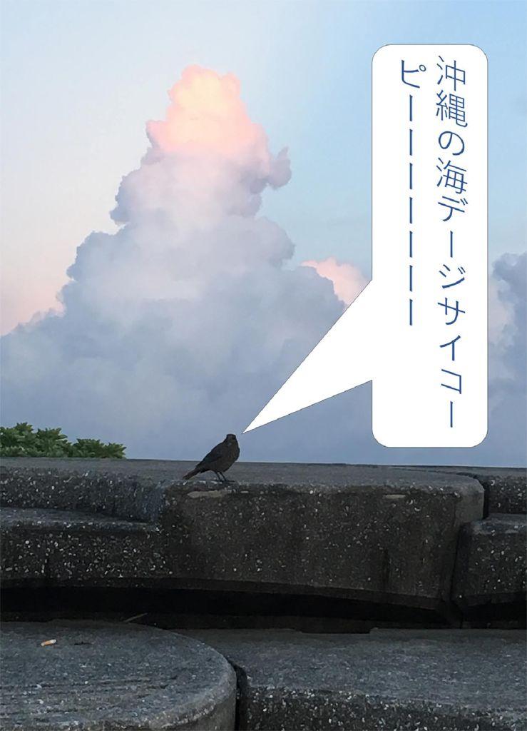 2018I76_47沖縄県金城有吾のサムネイル