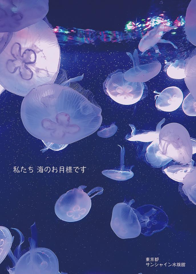 「私たち 海のお月様です」窪田 真菜さん