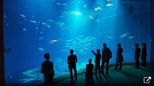 北の海の旅(Aquarium Exhibit – A journey through the seas of the North)</span>