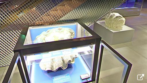 オゼアヌム海洋博物館(ドイツ)