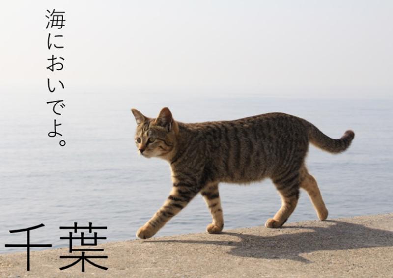 笹木風花(ささきふうか)2