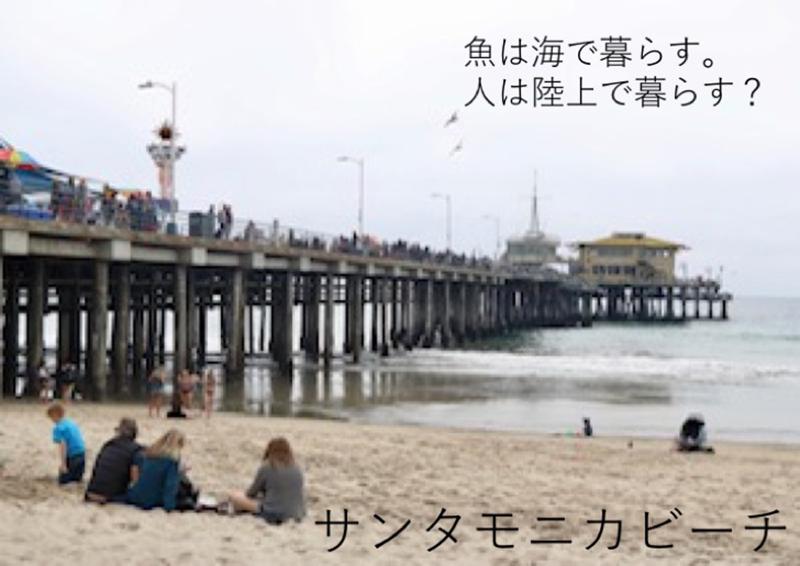 金井巽都(かないゆくと)